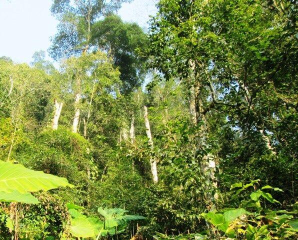 Kinh nghiệm đi rừng Bằng Tạ Ba Vì chi tiết nhất 2018