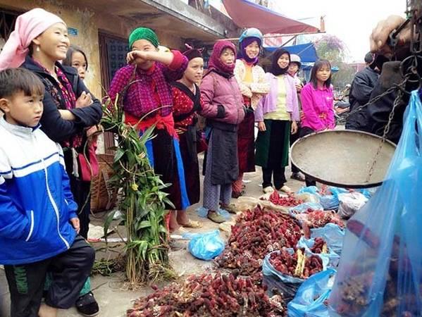 Du lịch Hà Giang, mua nấm ngọc cẩu làm quà